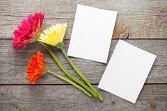 三个五颜六色的大丁草花和照片框架 图库摄影