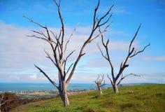 三个停止的结构树 库存图片