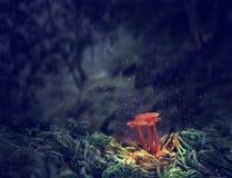 三个发光的蘑菇在奥秘黑暗的森林里 免版税库存照片
