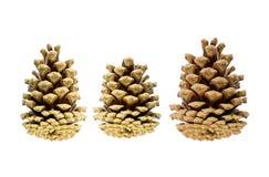 三个圣诞树锥体对称在白色背景,两大和中间在中心, basefestive 免版税库存照片