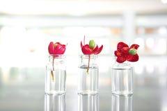 三个夏天红色花和小瓶在科学实验室 库存照片
