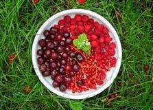 三个夏天莓果 免版税库存图片
