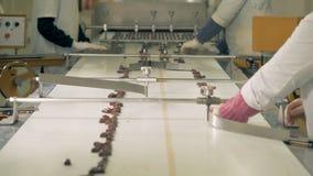 三个工厂劳工采摘并且排序在传动机的巧克力糖 股票视频