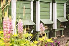 三个庭院蜂箱 免版税库存照片