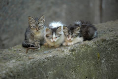 三个无家可归者小猫 免版税库存图片
