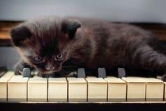 三个星期四只镶边小猫年纪 免版税库存照片