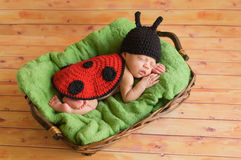 三个星期的老女婴佩带的瓢虫服装 库存图片