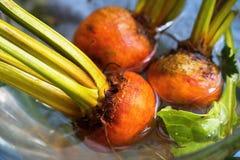 三个桔子甜菜 库存照片