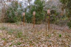 三个棒箱子在橡树的森林 库存图片