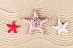 三个海星在沙子说谎对海 库存照片