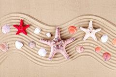 三个海星在沙子说谎对海 免版税库存照片