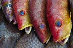 三个海鱼红色标度,飞翅是黄色和蓝色,圆的眼睛,开放嘴,新海鱼市场 库存照片