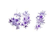 三个淡紫色花分支 免版税库存图片