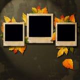 三个照片框架和许多叶子 免版税库存照片