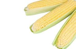三个玉米穗 免版税图库摄影