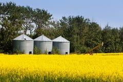 三个筒仓油菜油菜籽农业领域 免版税库存照片