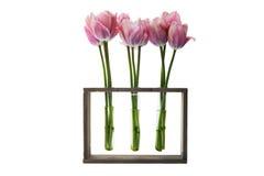 三个花瓶郁金香 库存照片