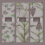 三个葡萄酒标签Ste用高梁,玉米和荞麦上色剪影 谷物种植汇集 库存照片