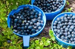 三个蓝色杯子有很多蓝莓本质上在蓝莓b附近 免版税图库摄影