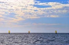 三个风帆冲浪者在墨西哥湾 免版税库存图片
