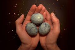 三个鸡蛋,绘了在黑背景的木槿茶,在人的糖釉棕榈和面包屑,象龙鸡蛋 库存图片