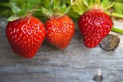 三个水多的草莓在庭院里 图库摄影
