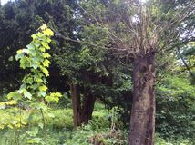 三个结构树 免版税图库摄影