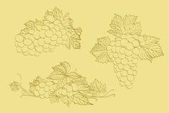 三串葡萄 免版税库存照片