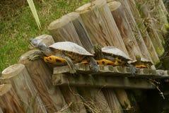三乌龟 库存图片