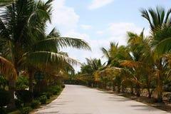 三亚椰子 免版税库存图片