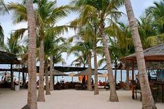 三亚椰子 库存照片