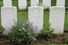 三位未知的WW1加拿大人战士坟墓  库存照片