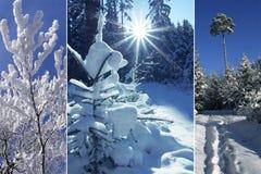 三倍-冬天森林 图库摄影