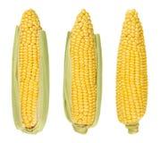 三剥甜玉米壳玉米棒,被隔绝,在白色 免版税库存照片