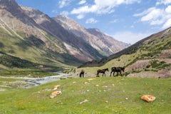 三匹吃草的棕色马 免版税库存照片