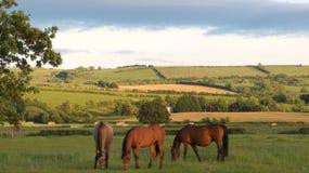 三匹母马 免版税库存图片