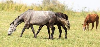 三匹马在一个牧场地本质上 库存照片