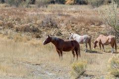 三匹马在一个自由放养的草甸 免版税图库摄影
