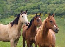 三匹马 库存图片