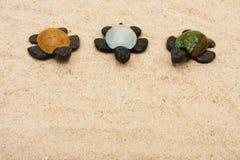 三只乌龟 库存图片