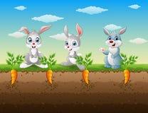 三只兔子动画片在红萝卜庭院里 库存例证
