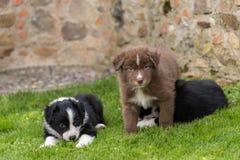 三只好奇小狗在庭院里 库存图片