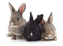三只小兔子 库存照片