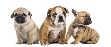 三只小狗肩并肩, 免版税库存照片