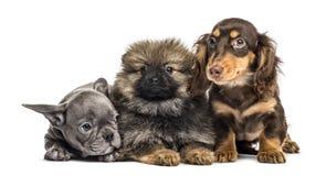 三只小狗肩并肩, 免版税库存图片