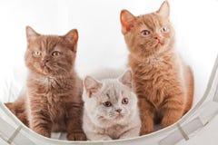 坐在白色袋子的三只小猫 库存照片