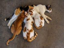 三只小猫和母亲猫在地板上 免版税库存照片