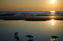 三只小的鸟日落 库存图片