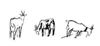 三只山羊剪影  免版税库存图片