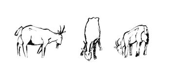 三只山羊剪影  免版税图库摄影
